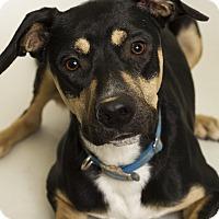 Adopt A Pet :: Pal - Baton Rouge, LA