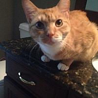 Adopt A Pet :: Greta - Tampa, FL