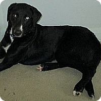 Adopt A Pet :: Levi - Hamilton, ON
