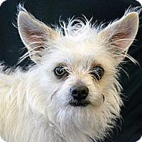 Adopt A Pet :: Pollomo - Cheyenne, WY