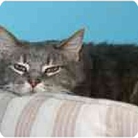 Adopt A Pet :: Crunchie - Marietta, GA