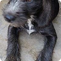 Adopt A Pet :: DELILAH - Mission Viejo, CA