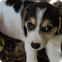 Adopt A Pet :: Pepper Pots - Austin, TX
