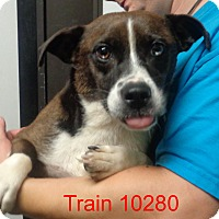 Adopt A Pet :: Train - Greencastle, NC
