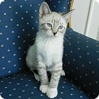 Adopt A Pet :: Dexter - Davis, CA