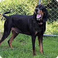 Adopt A Pet :: Rugar T. - Winfield, PA