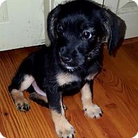 Adopt A Pet :: Wyatt - Cleveland, OH