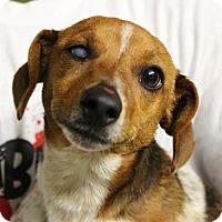 Adopt A Pet :: Rusty - Waco, TX