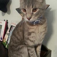 Adopt A Pet :: Snowball - Hartford, KY
