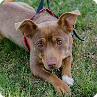 Adopt A Pet :: Lana - Greenwood, SC