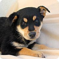 Adopt A Pet :: Baxter - Los Angeles, CA