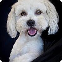 Adopt A Pet :: Wally - Phelan, CA