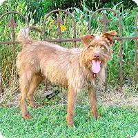 Adopt A Pet :: COCOA - Hartford, CT
