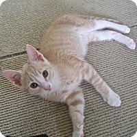 Adopt A Pet :: Clematis - Covington, KY