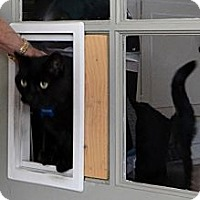 Adopt A Pet :: Frankie - Laguna Woods, CA
