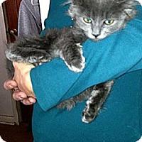 Adopt A Pet :: Smokey - Patterson, NY