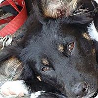 Adopt A Pet :: Duke - New Boston, NH