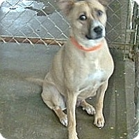 Adopt A Pet :: REESE - Henderson, KY