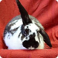 Adopt A Pet :: Camilla - Chicago, IL