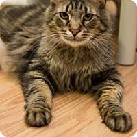 Adopt A Pet :: Carmel - Frankenmuth, MI