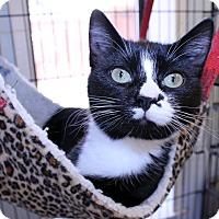 Adopt A Pet :: Bell - Lumberton, NC