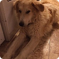Adopt A Pet :: Charlie - Gallatin, TN