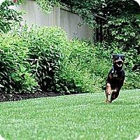 Adopt A Pet :: Reggie - Springvale, ME