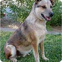 Adopt A Pet :: Rowdy - Phoenix, AZ
