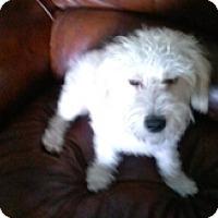 Adopt A Pet :: MARGO - Melbourne, FL