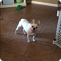 Adopt A Pet :: Pearl - Cibolo, TX