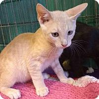 Adopt A Pet :: Mozart - Seminole, FL