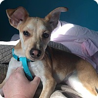 Adopt A Pet :: Mark (reduced fee) - Windham, NH