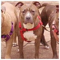Adopt A Pet :: Trivia (COURTESY POST) - Baltimore, MD