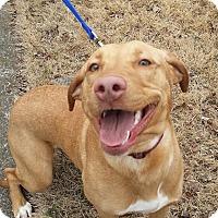 Adopt A Pet :: Pippa - PORTLAND, ME