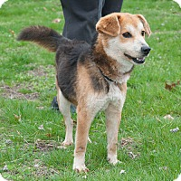 Shepherd (Unknown Type)/Beagle Mix Dog for adoption in New Martinsville, West Virginia - Sparks