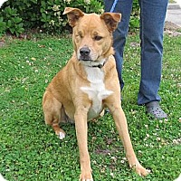 Adopt A Pet :: Lilly - Kingwood, TX