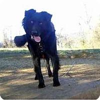 Adopt A Pet :: Shadow - Honaker, VA