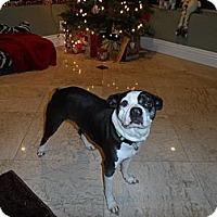 Adopt A Pet :: Spade - Temecula, CA