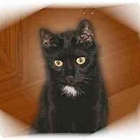 Adopt A Pet :: Cinder - Montgomery, IL