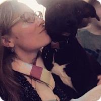 Adopt A Pet :: WOOPIE - Cornwall, ON