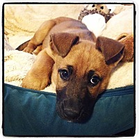 Adopt A Pet :: Esmerelda - Marietta, GA