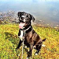 Adopt A Pet :: Sargie - Oak Lawn, IL