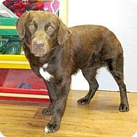 Adopt A Pet :: 17-d03-040 Wimpy - Fayetteville, TN