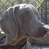 Adopt A Pet :: Erin - Birmingham, AL