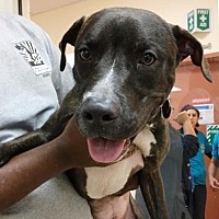 Adopt A Pet :: Zack - Miami, FL
