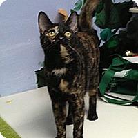 Adopt A Pet :: Pretty Girl - Patterson, NY