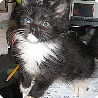 Adopt A Pet :: Caity - Harriman, NY