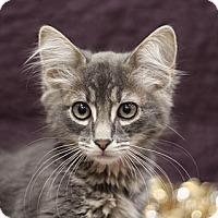 Adopt A Pet :: Harry - Sacramento, CA