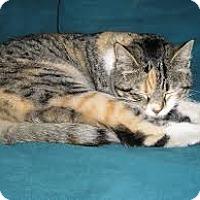 Adopt A Pet :: Penny - Lancaster, MA