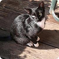 Adopt A Pet :: *LILY - Winder, GA